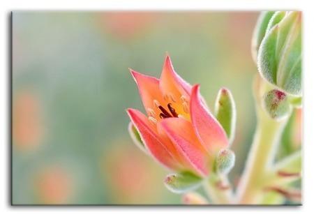 Kwiaty-reprodukcja płótno 60x90 cm G94678